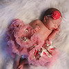 Lilly ~ Newborn {2013} :